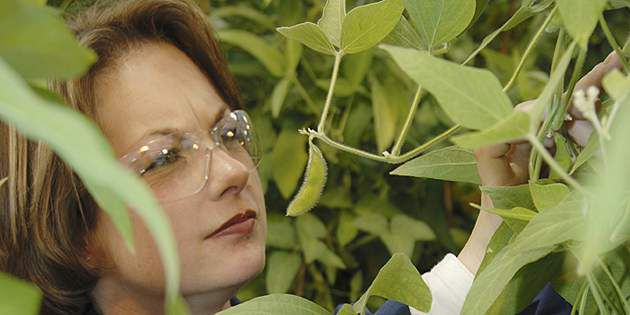 Plenish™ high oleic soybeans provide benefits from growers to consumers