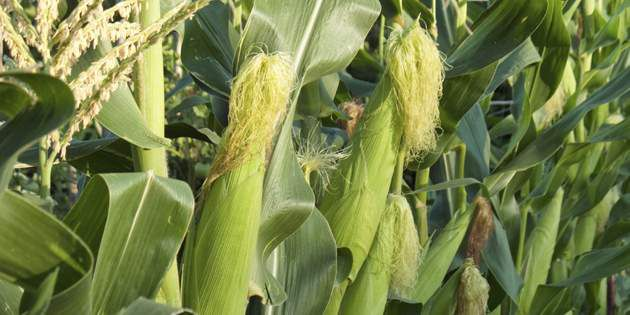 DuPont™ Prevathon® for bountiful corn harvests.