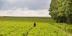 Поддельные и запрещенные пестициды