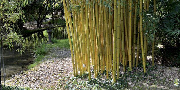 Wurzelsperre Schutz Gegen Rhizome Plantex Wurzelsperre Dupont