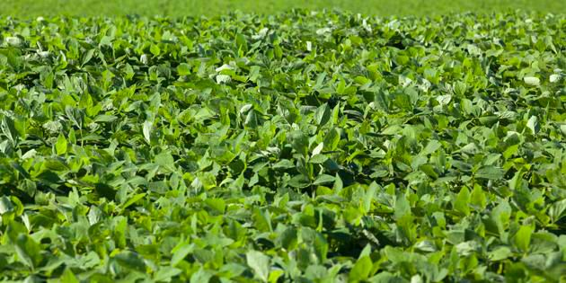 DuPont™ Enlite® herbicide provides consistent contact plus residual weed control.