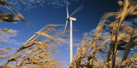 Energy_977476_WindFarm_cropped_with_wheat_630x315_630x315