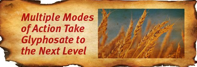 Multiple modes of action, take glyphosate to the next level