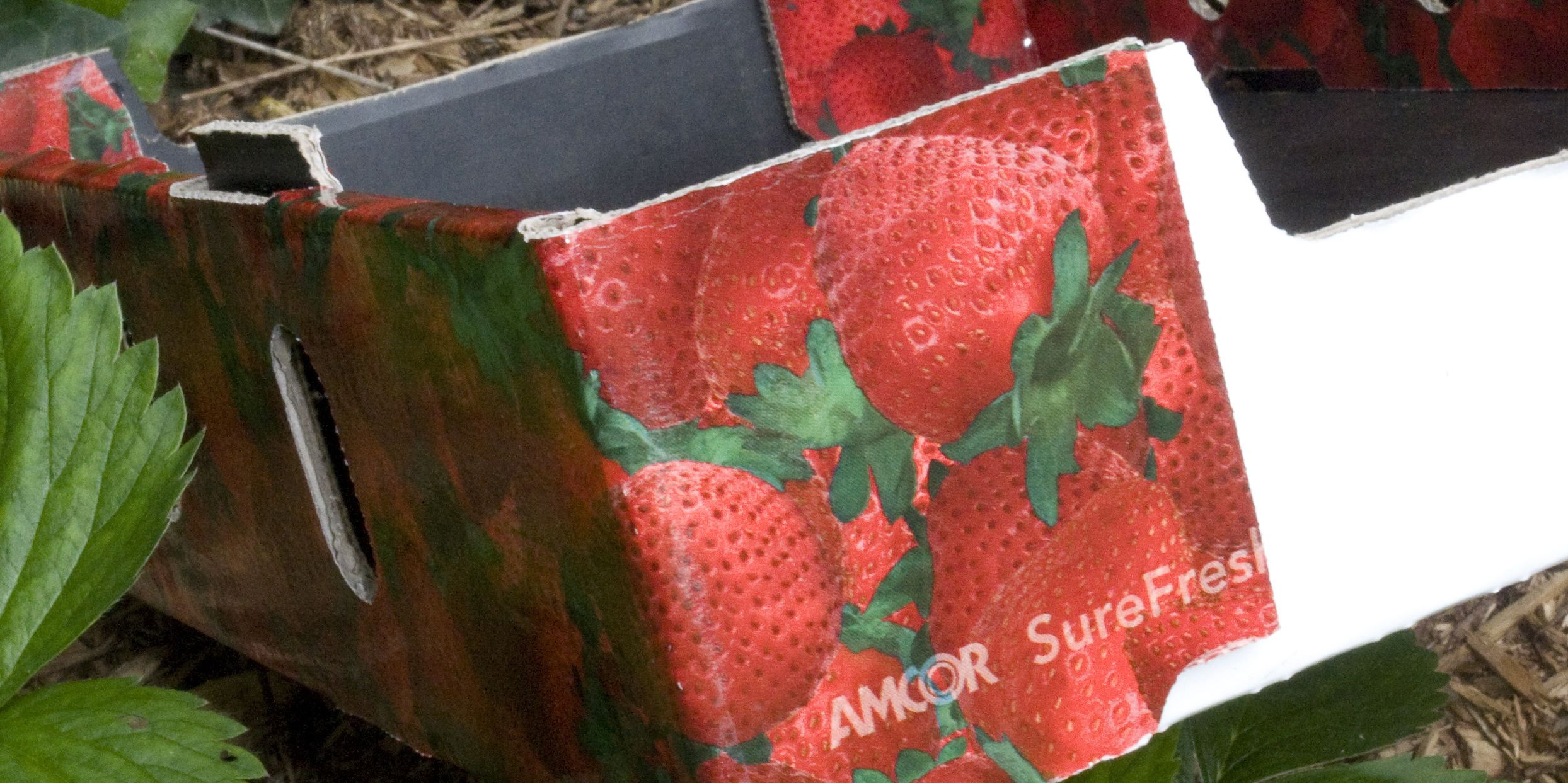 Sustainable Fruit Packaging