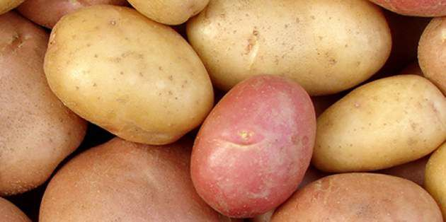 DuPont fungicides, herbicides and insecticides help potato growers increase production.
