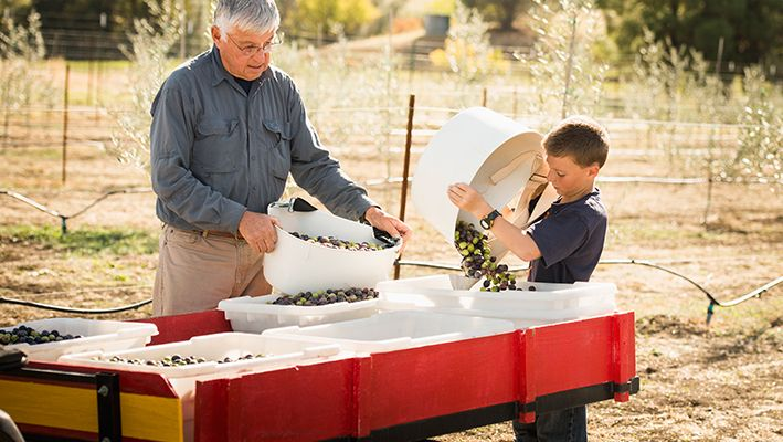 An older man sorts crops with a young boy.