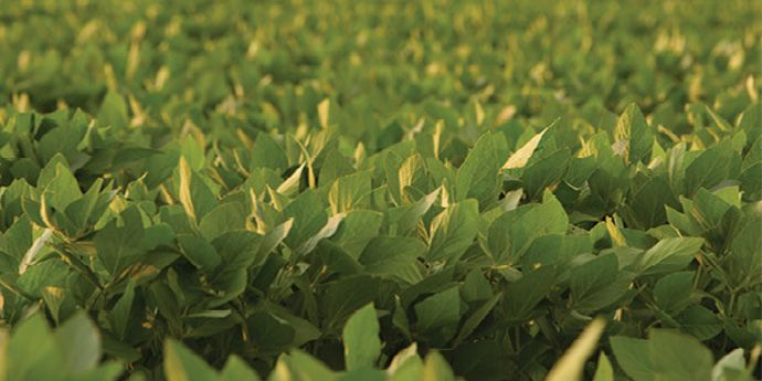 Reliable soybean disease control using Aproach® fungicide produces results growers will see.