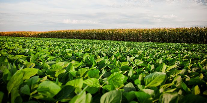 DuPont Crop Protection has the solutions to help protect the foliar health of your corn, soybean and wheat crops.