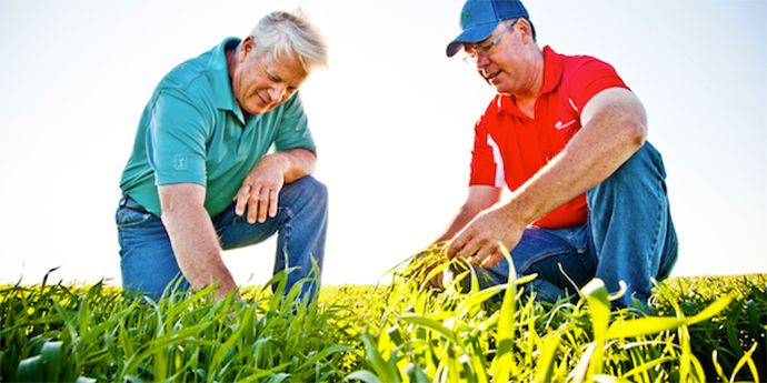 Aproach® fungicide controls powdery mildew to guard yield potential in wheat.