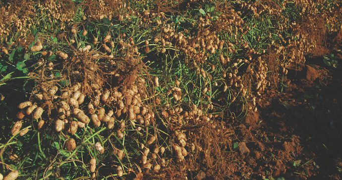 Prevathon® delivers peanut worm control to help avoid yield loss.