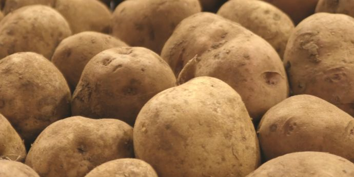 V2™ Advantage is a full-season potato management program