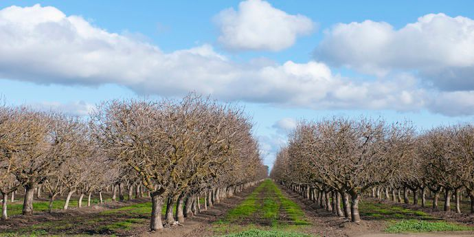 Matrix® SG is part of a proactive orchard weed control program