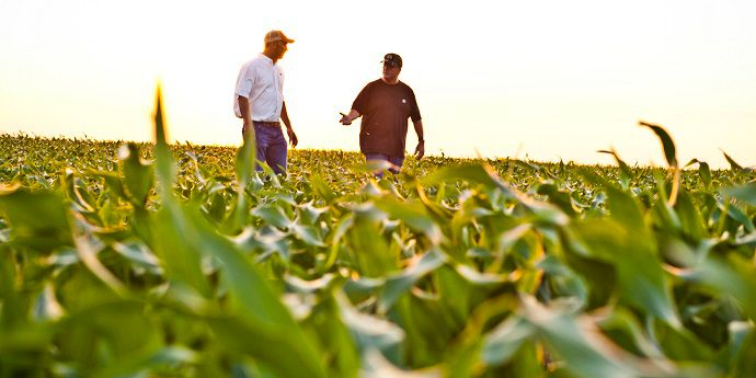 A two-pass herbicide program as an effective strategy to enhance corn yield.