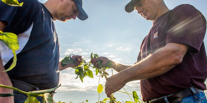 Farmer and agronomist evaluate field for results of fungicide use.