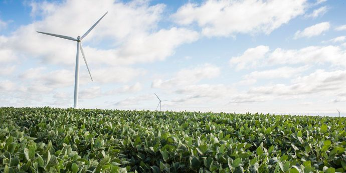 Follow guidelines for wind speed during herbicide applications.
