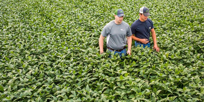 Protect soybean yield with a fungicide using effective movement properties