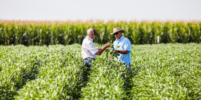 Aproach® Prima fungicide provides resistant disease control to help protect grain quality and yield.