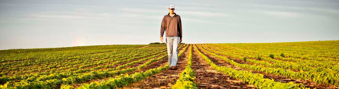 Resistance Management Burndown Control In Soybeans Trivence