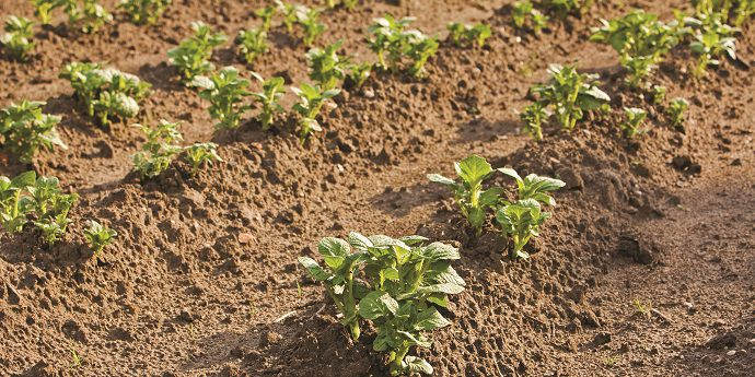 Vertisan® delivers broad-spectrum potato disease control.