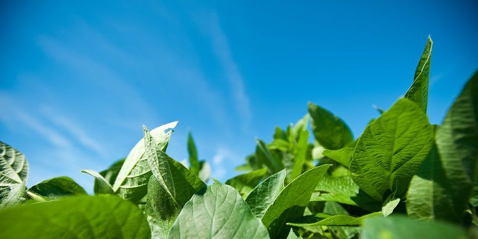FeXapan™ herbicide plus VaporGrip® Technology with its low-volatility dicamba helps control weeds for greater soybean yield.
