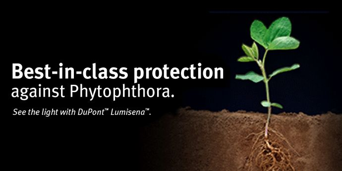 Lumisena™ fungicide seed treatment helps protect soybeans from phytophthora.