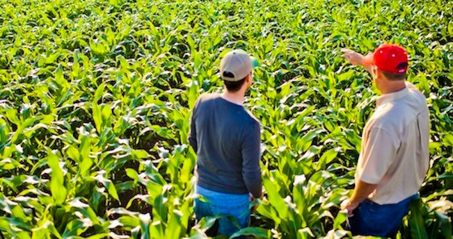 Abundit® Extra herbicide offers proven control of more than 100 annual and perennial grass and broadleaf weeds in glyphosate-tolerant corn, soybeans and other crops.