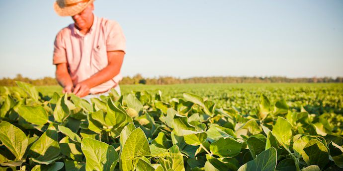 Envive® herbicide gives soybean growers peace of mind by offering longer-lasting, more consistent weed control, including glyphosate-tolerant or resistant weeds.