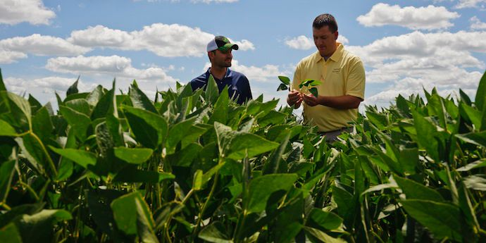 Synchrony® XP Herbicide boosts glyphosate activity on broadleaf weeds with no waiting before planting soybeans.