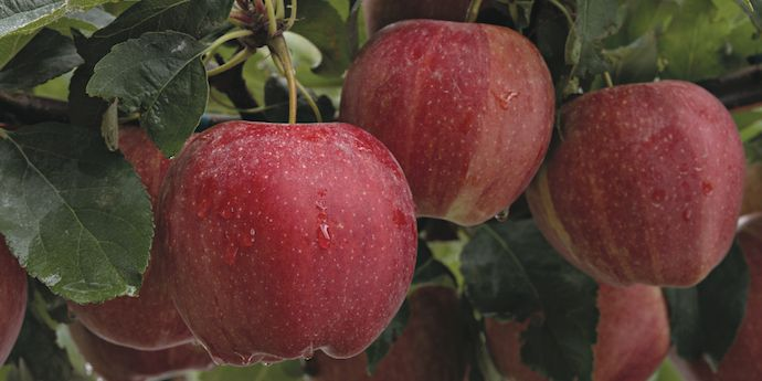 Altacor® offers consistent control of key pests in stone fruit, pome fruit, tree nuts, grapes and more.