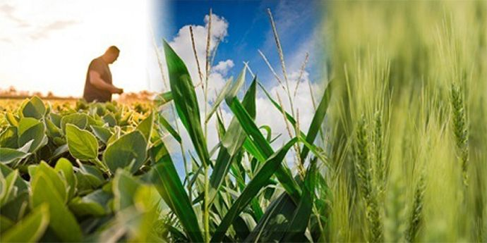 Aproach™ fungicide helps deliver plant disease control and improved yield.