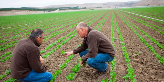 Get the most from California and Arizona crops with tailored crop protection solutions.