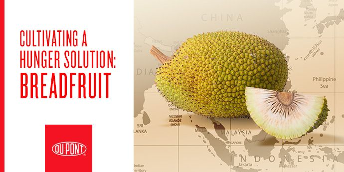 Fighting Hunger with Breadfruit