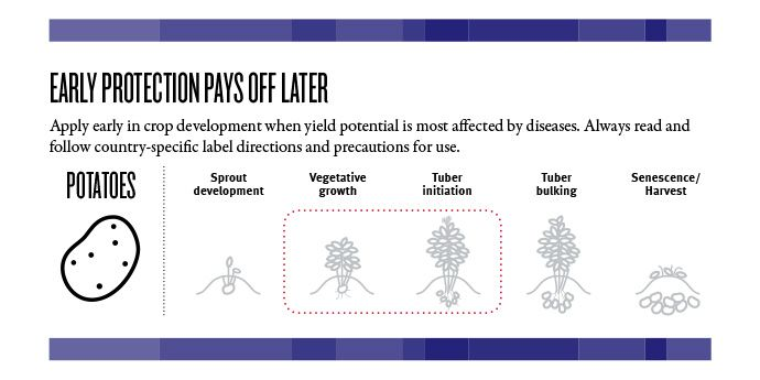 Early protection pays off later. Apply early in crop development when yield potential is most affected by diseases.