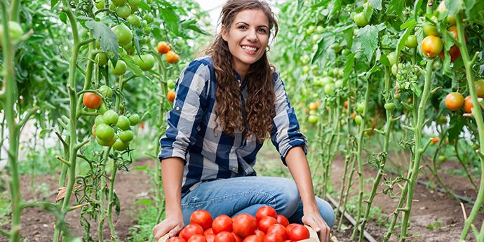 Grower showing the result of her tomato harvest. Use DuPont™ Zorvec™ as directed for effective resistance management.