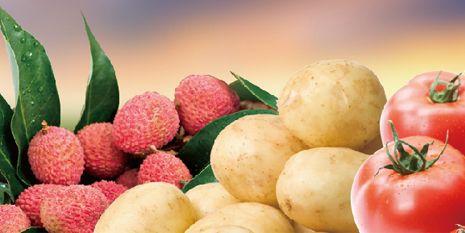 杜邦™克露®為種植者帶來了飽滿的馬鈴薯