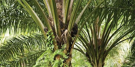 sustainable_palm_trees