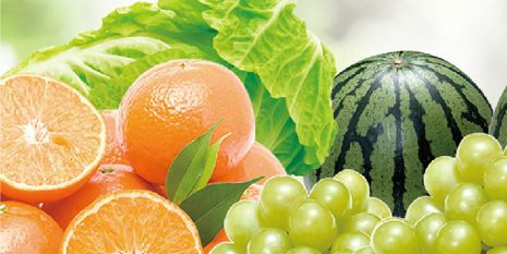 杜邦™易保®為種植者帶來了碩果累累的葡萄
