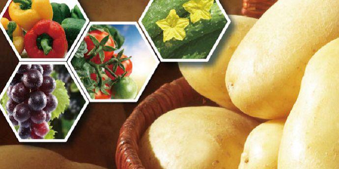 杜邦™增威贏綠™為種植者帶來了更勻稱、飽滿的黃瓜、番茄和辣椒