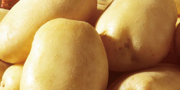 杜邦™增威赢绿™为种植者带来了果实更匀称、饱满的马铃薯