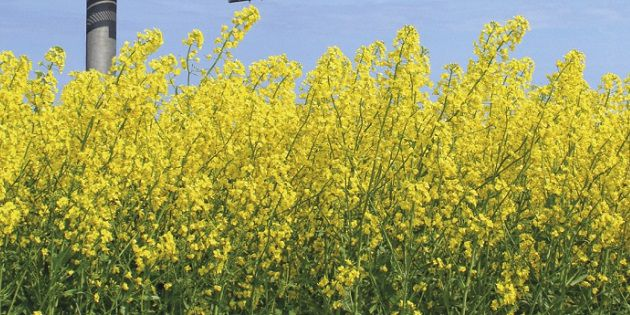 Flanker fungicde for control of sclerotinia