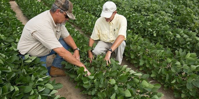 Learn strategies for protecting crop yield potential by preventing disease damage.