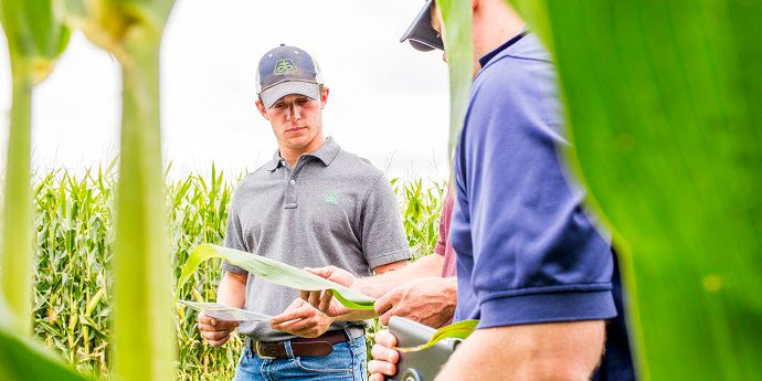 Early scouting helps maintain control over northern corn leaf blight yield loss.