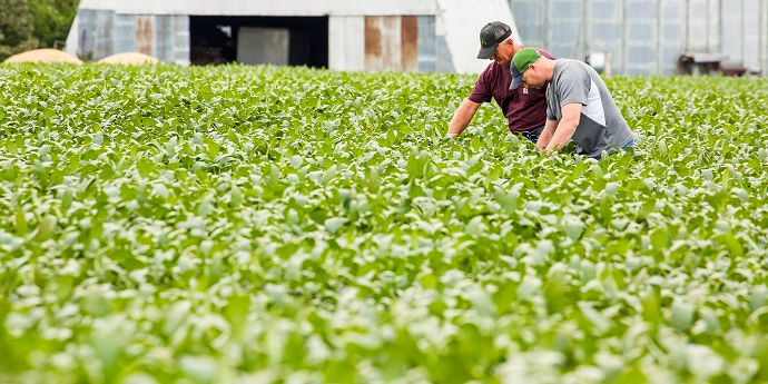 Grower and agronomist check plant health in a soybean field