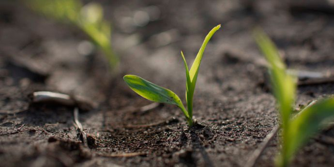 Lumivia™ insecticide seed treatment helps protect corn seed and seedlings from chewing insects.