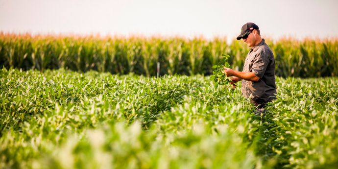 Get the most from Northeast crops with tailored crop protection solutions.